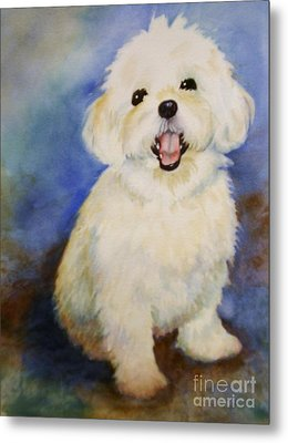 Metal Print featuring the painting Maltese Named Ben by Marilyn Jacobson