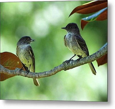 Mama And Papa Kingbird Metal Print