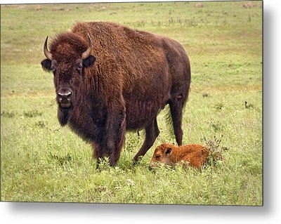 Mama Watching Over Baby Metal Print by Tamyra Ayles