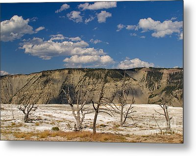 Metal Print featuring the photograph Mammoth Springs Sentinels by Charles Kozierok