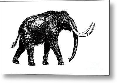 Mammoth Tee Metal Print by Edward Fielding