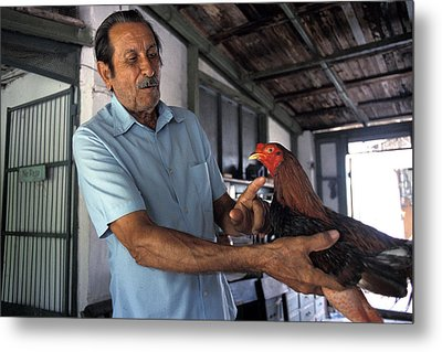 Man With Fighting Cock Metal Print