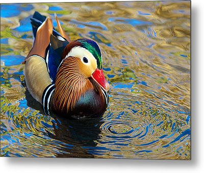 Mandarin Duck Swirls Metal Print
