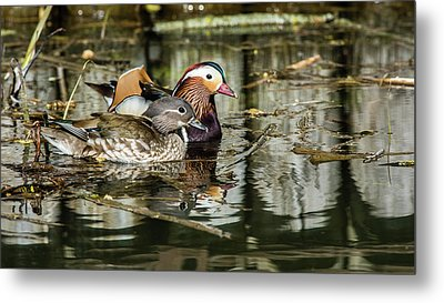 Mandarin Ducks The Couple Metal Print by Torbjorn Swenelius