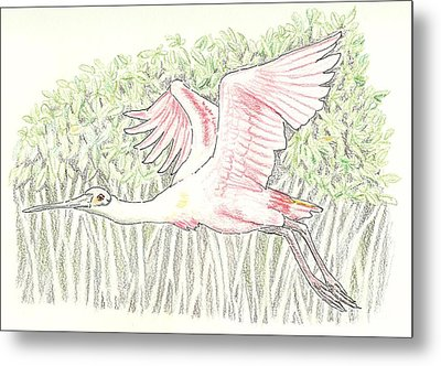 Mangrove Flyer - Pencil Without Water Metal Print by Sue Bonnar