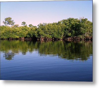 Mangrove Forest Metal Print by Steven Scott