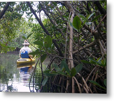 Mangrove Kayaker Metal Print by Steven Scott