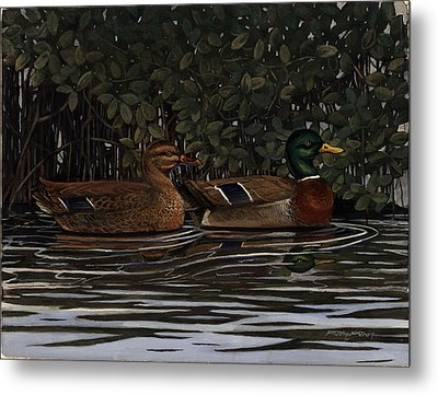 Mangrove Mallards Metal Print by Timothy Tron