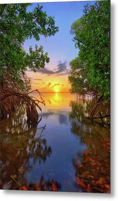 Mangrove Sunset From Jensen Beach Florida Metal Print