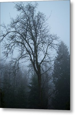 Maple In Fog Metal Print by Ken Day