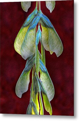Maple Seeds Metal Print by Tom Mc Nemar