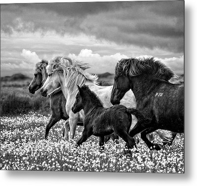 March Of The Mares Metal Print