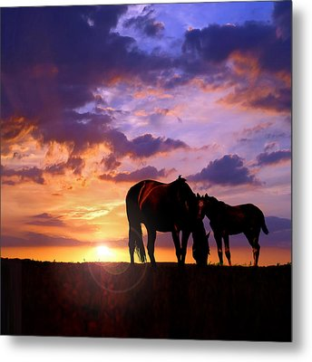 Mare And Foal Metal Print by Rod Seel
