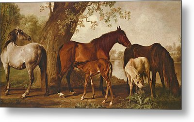 Mare And Foals Metal Print by George Stubbs