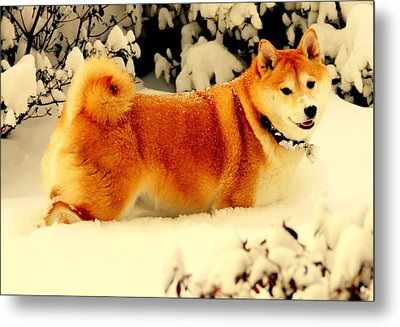 Margo Likes The Snow Metal Print by Aron Chervin