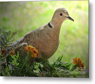 Metal Print featuring the photograph Marigold Dove by Debbie Portwood
