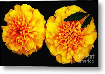 Metal Print featuring the photograph Marigolds With Oil Painting Effect by Rose Santuci-Sofranko