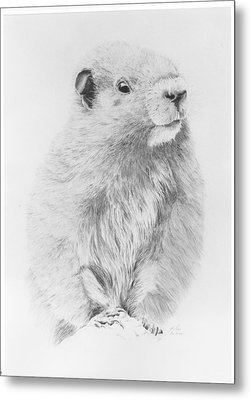 Marmot Metal Print by Glen Frear
