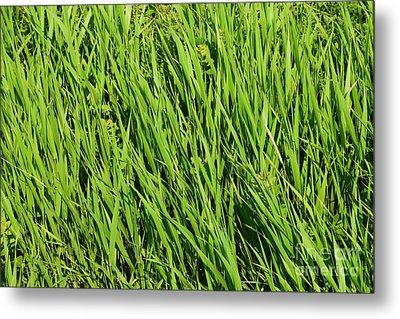 Marsh Grasses Metal Print
