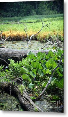 Marsh Metal Print by Jeannie Burleson