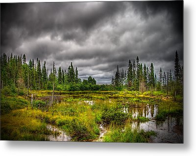 Marsh Near The Lake Metal Print by Michel Filion