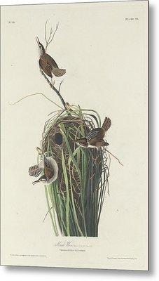 Marsh Wren Metal Print by Rob Dreyer