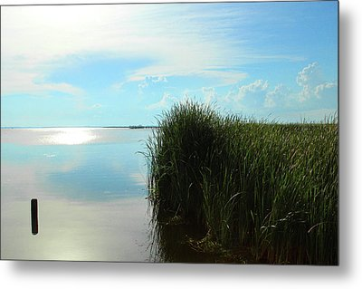 Marshland Metal Print by David Stasiak