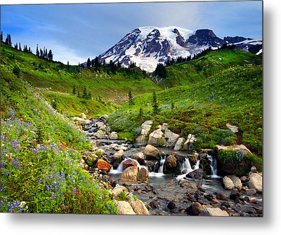 Martha Creek Wildflowers Metal Print by Mike  Dawson