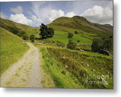 Martindale Common Metal Print by Nichola Denny