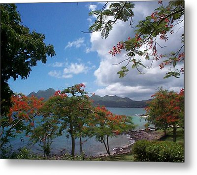 Metal Print featuring the photograph Martinique by Mary-Lee Sanders