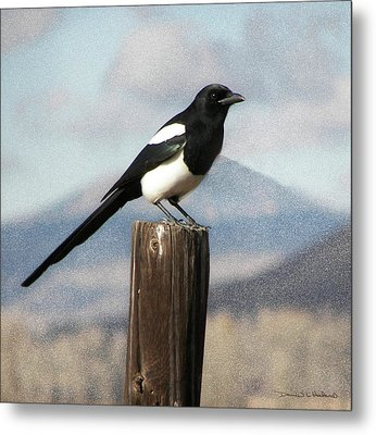 Marty The Magpie Metal Print