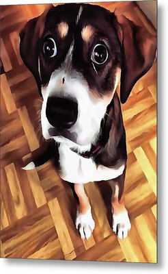 Marty The Soulful Eyed Dog  Metal Print by Tracey Harrington-Simpson