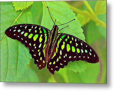 Marvelous Malachite Butterfly 2 Metal Print