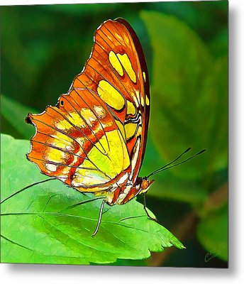 Marvelous Malachite Butterfly Metal Print