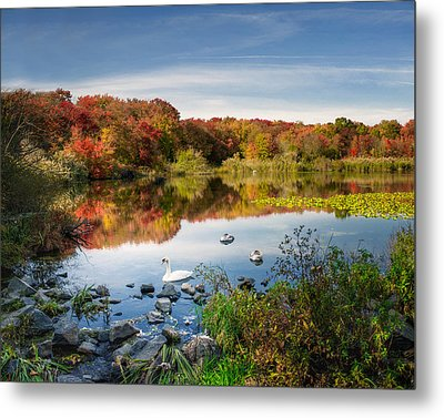 Massapequa Lake And A Swan Metal Print