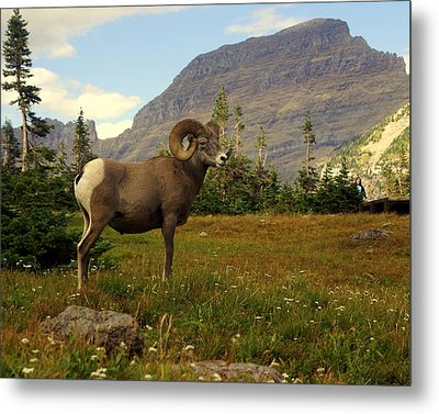 Master Of His Domain Metal Print by Marty Koch