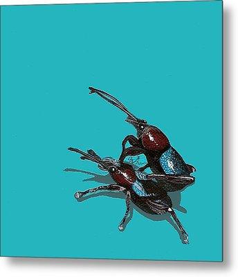 Mating Weevils Metal Print