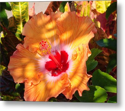 Metal Print featuring the photograph Maui Hybiscus  by Tamara Bettencourt