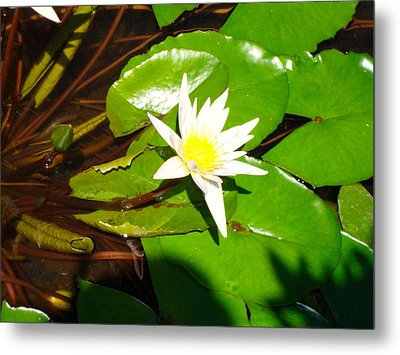 Maui Lily Metal Print by Tamara Bettencourt