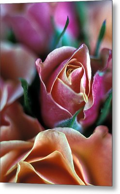 Mauve And Peach Roses Metal Print by Kathy Yates