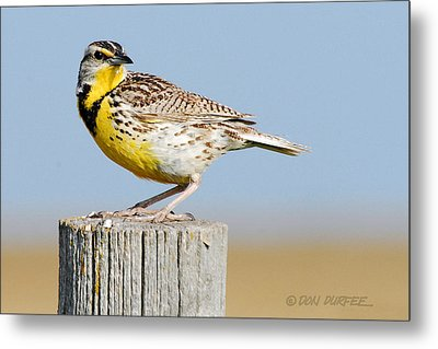 Metal Print featuring the photograph Meadowlark 1 by Don Durfee