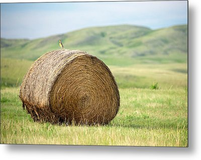 Meadowlark Heaven Metal Print