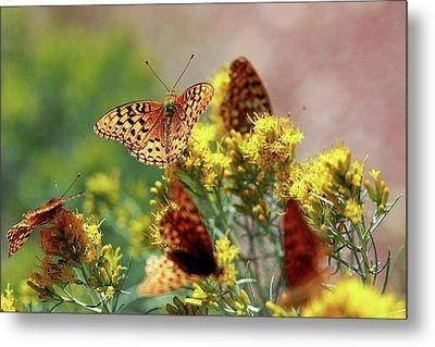 Meagher County Butterflies Metal Print