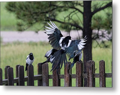 Meals On Wings Metal Print by Alana Thrower