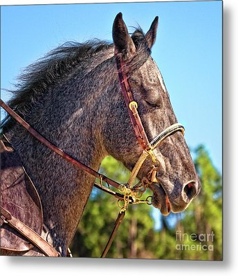 Meditative Horse Metal Print by Stephanie Hayes
