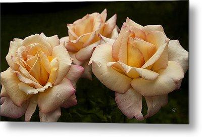 Medley Of Three Yellow Roses Metal Print