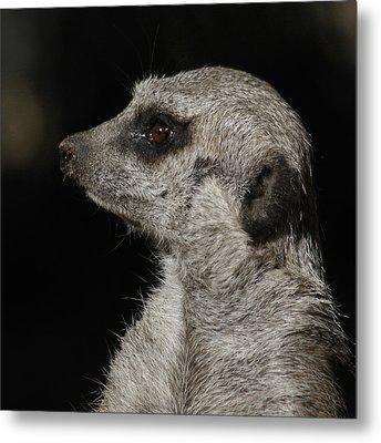 Meerkat Profile Metal Print by Ernie Echols