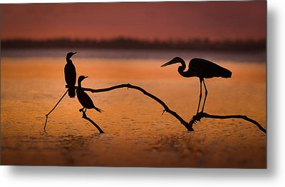 Meeting At Sunset Metal Print by Jean-luc Besson
