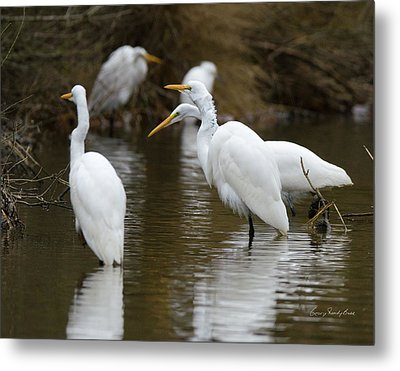 Metal Print featuring the photograph Meeting Of The Egrets by George Randy Bass