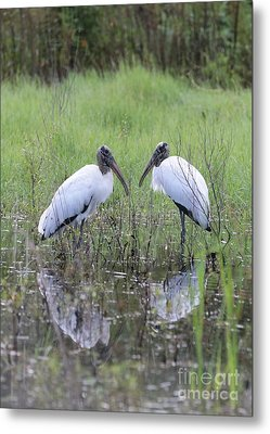 Meeting Of The Minds Metal Print by Carol Groenen
